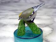 Bird3002