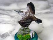 Bird3004