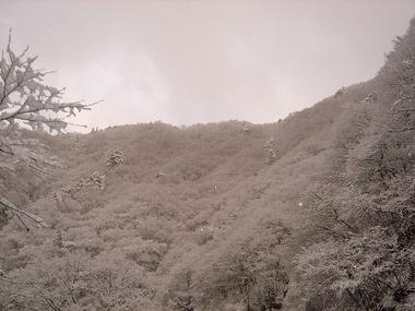 Katashinadsc05942