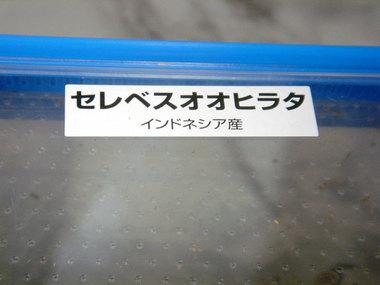 Oohirata002